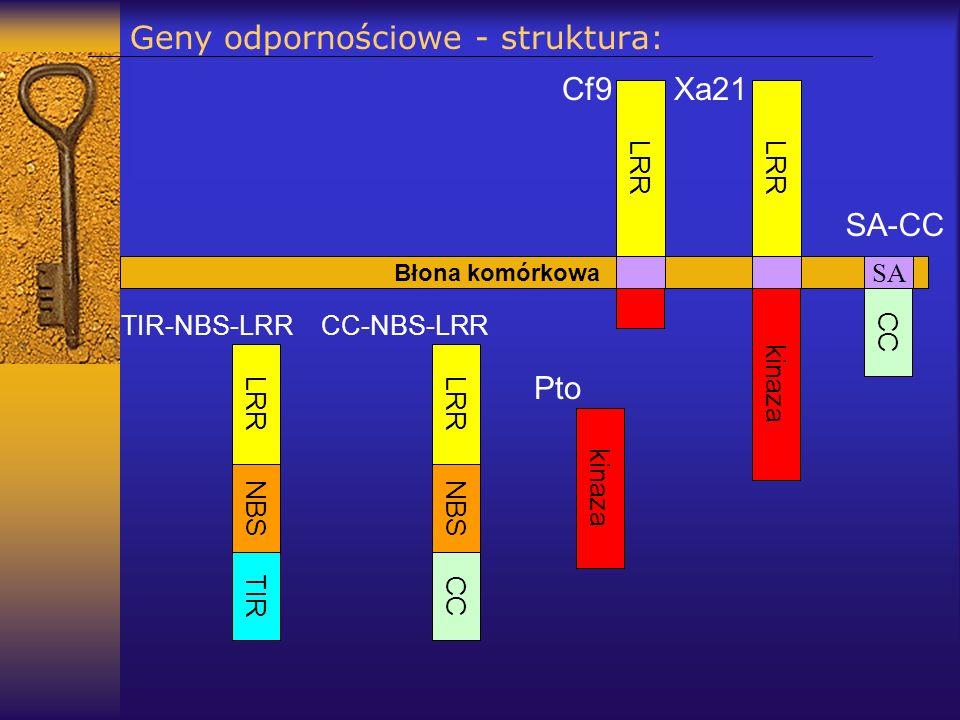 Geny odpornościowe - struktura: Błona komórkowa LRR Xa21 LRR Cf9 kinaza Pto kinaza LRR NBS TIR LRR NBS CC CC-NBS-LRRTIR-NBS-LRR SA CC SA-CC
