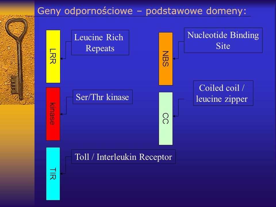 Geny odpornościowe – podstawowe domeny: LRR kinase NBS TIR CC Ser/Thr kinase Leucine Rich Repeats Toll / Interleukin Receptor Nucleotide Binding Site