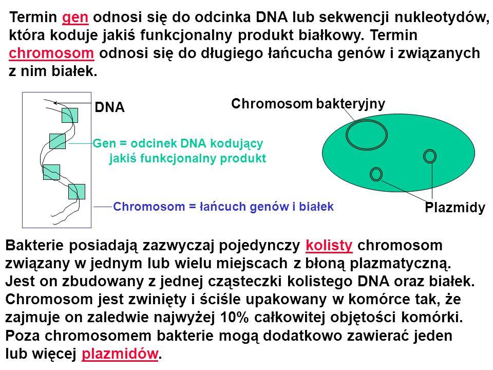 Termin gen odnosi się do odcinka DNA lub sekwencji nukleotydów, która koduje jakiś funkcjonalny produkt białkowy. Termin chromosom odnosi się do długi