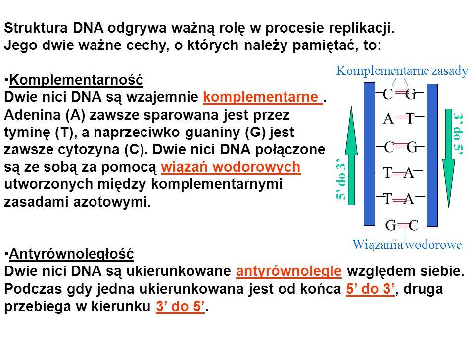 Komplementarne zasady Wiązania wodorowe 5 do 3 3 do 5 G C A T C G T A C G Struktura DNA odgrywa ważną rolę w procesie replikacji. Jego dwie ważne cech