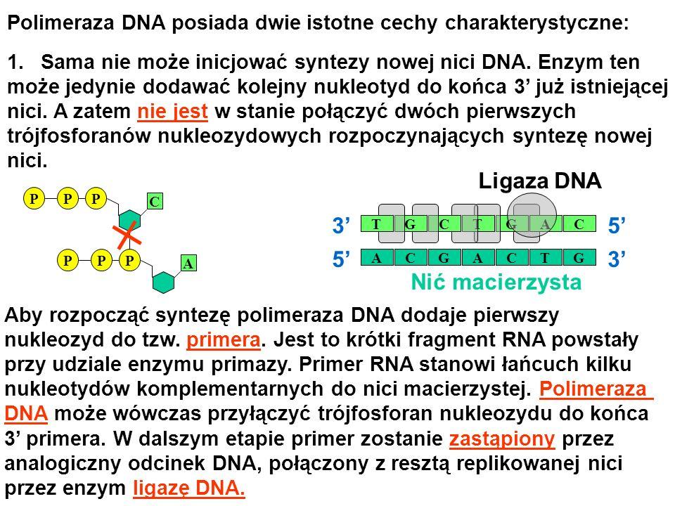 Polimeraza DNA posiada dwie istotne cechy charakterystyczne: Aby rozpocząć syntezę polimeraza DNA dodaje pierwszy nukleozyd do tzw. primera. Jest to k