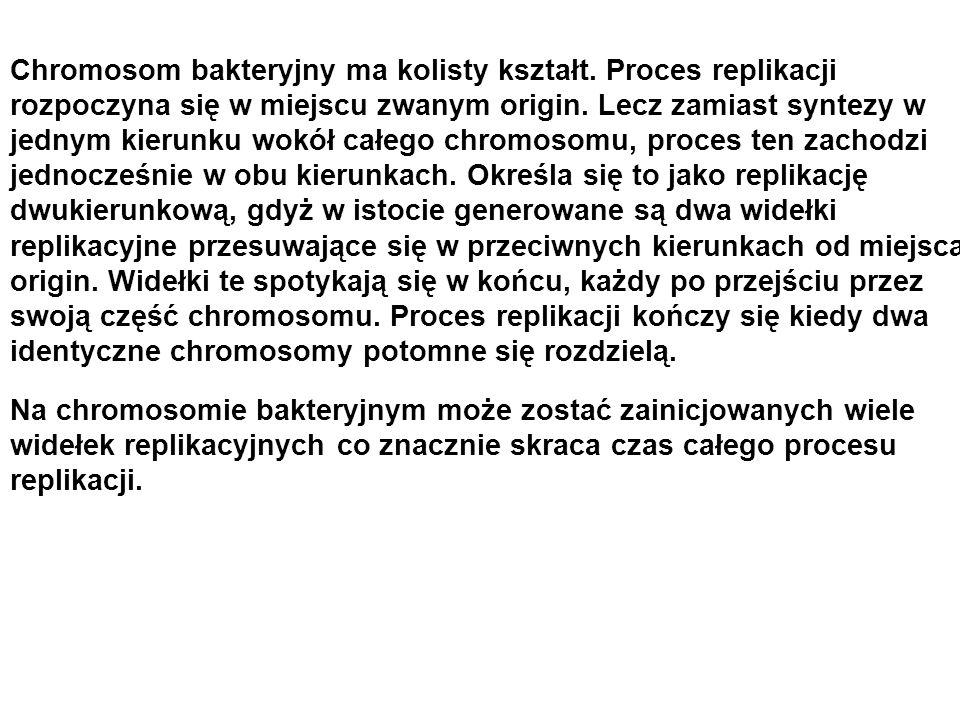 Chromosom bakteryjny ma kolisty kształt. Proces replikacji rozpoczyna się w miejscu zwanym origin. Lecz zamiast syntezy w jednym kierunku wokół całego