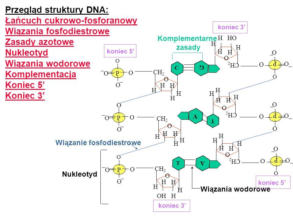 Termin gen odnosi się do odcinka DNA lub sekwencji nukleotydów, która koduje jakiś funkcjonalny produkt białkowy.