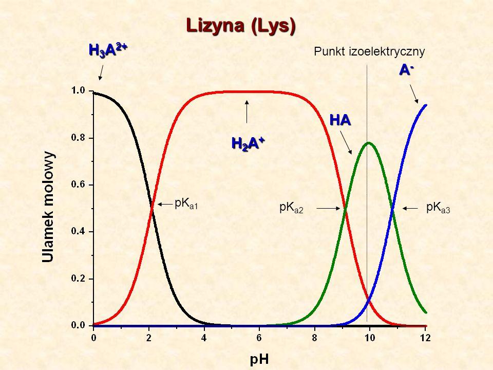 Lizyna (Lys) H 3 A 2+ H2A+H2A+H2A+H2A+ A-A-A-A- HA Punkt izoelektryczny pK a1 pK a2 pK a3