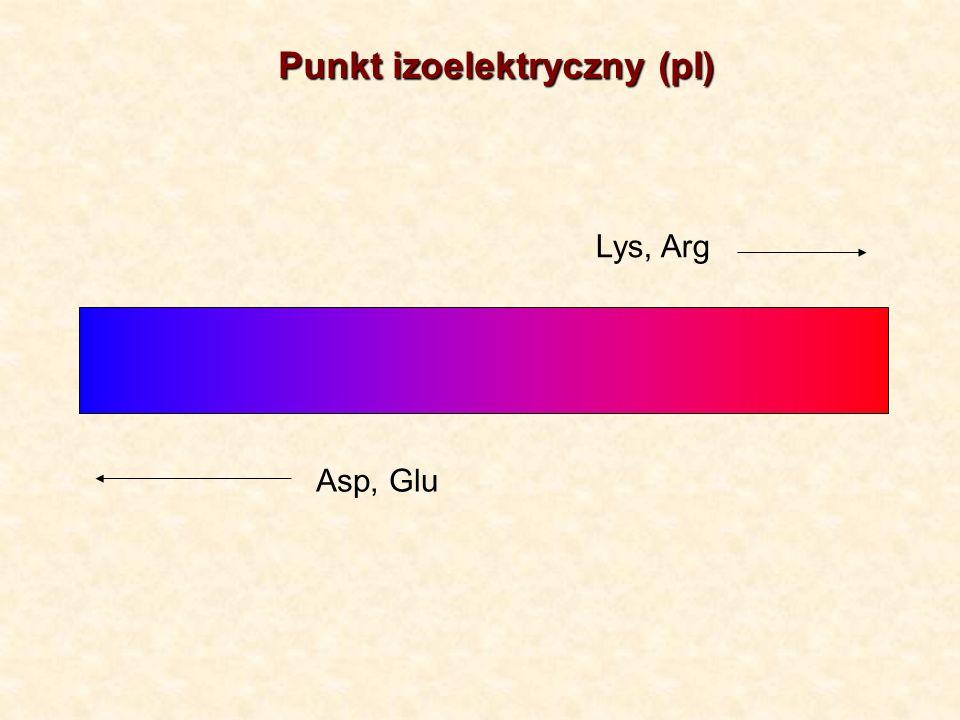 Punkt izoelektryczny (pI) Asp, Glu Lys, Arg