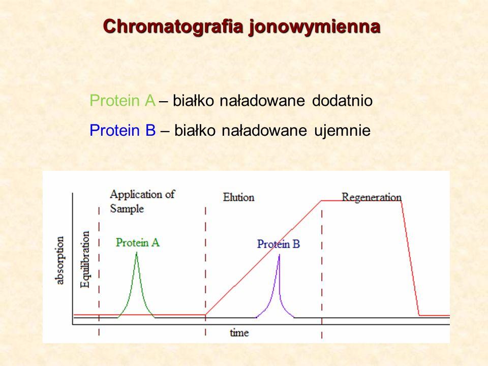 Protein A – białko naładowane dodatnio Protein B – białko naładowane ujemnie