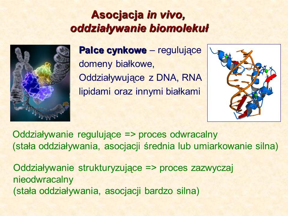 Asocjacja in vivo, Asocjacja in vivo, oddziaływanie biomolekuł Palce cynkowe Palce cynkowe – regulujące domeny białkowe, Oddziaływujące z DNA, RNA lip