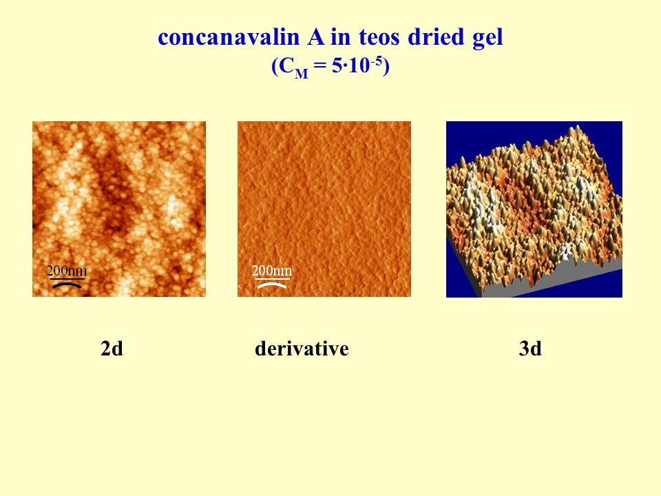 concanavalin A in teos dried gel (C M = 5·10 -5 ) 2dderivative3d
