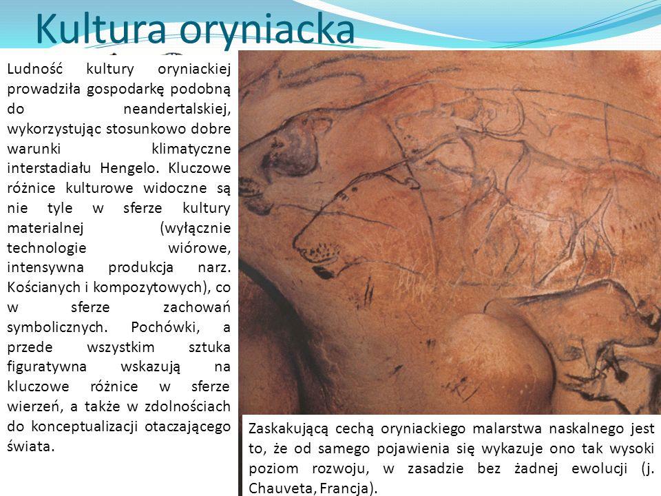 Kultura oryniacka Okres rozwoju kultur oryniackich klasycznie dzielono na V faz, definiowanych obecnością charakterystycznych typów ostrzy kościanych.