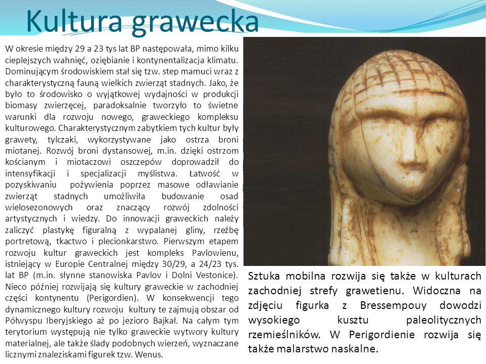 Kultura grawecka W okresie między 29 a 23 tys lat BP następowała, mimo kilku cieplejszych wahnięć, oziębianie i kontynentalizacja klimatu. Dominującym