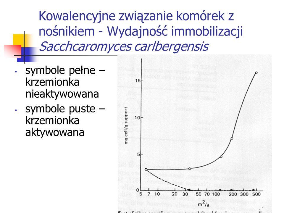 Kowalencyjne związanie komórek z nośnikiem - Wydajność immobilizacji Sacchcaromyces carlbergensis symbole pełne – krzemionka nieaktywowana symbole pus