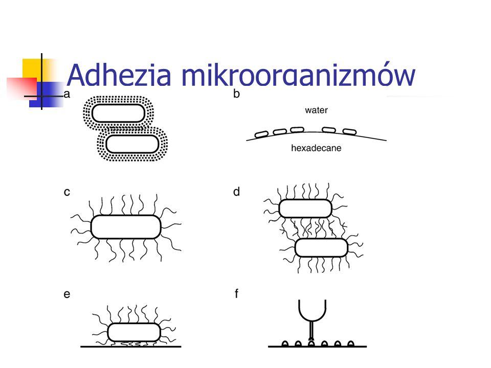 Adhezja mikroorganizmów