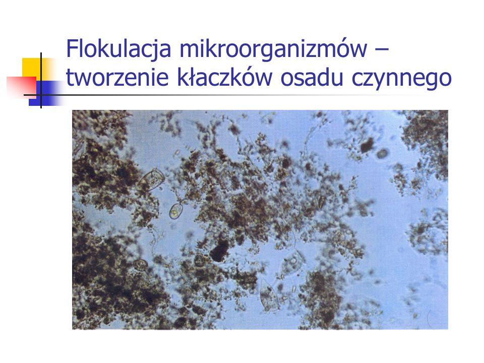 Flokulacja mikroorganizmów – tworzenie kłaczków osadu czynnego