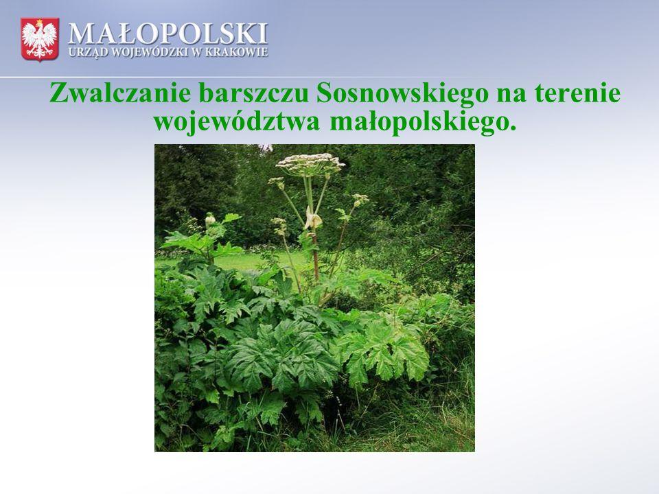 Barszcz Sosnowskiego Barszcz Sosnowskiego jest rośliną inwazyjną szeroko rozpowszechnioną na terenie województwa małopolskiego.