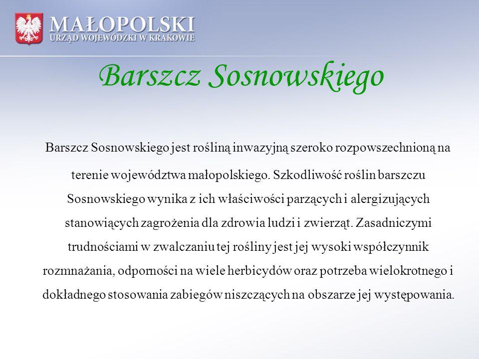 Barszcz Sosnowskiego Większe skupiska barszczu Sosnowskiego zlokalizowane są w 38 gminach położonych na terenie 16 powiatów województwa małopolskiego, głównie na nieużytkach oraz w pobliżu cieków wodnych.