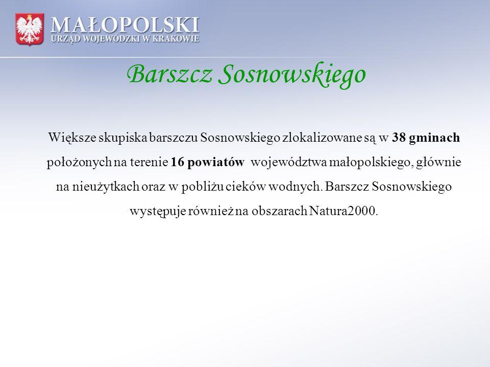 Barszcz Sosnowskiego Większe skupiska barszczu Sosnowskiego zlokalizowane są w 38 gminach położonych na terenie 16 powiatów województwa małopolskiego,