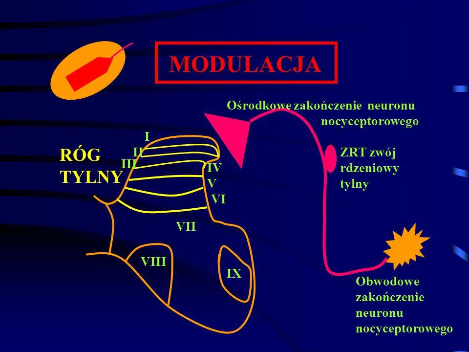 MODULACJA Ośrodkowe zakończenie neuronu nocyceptorowego ZRT zwój rdzeniowy tylny Obwodowe zakończenie neuronu nocyceptorowego I II III IV V VI VII VII