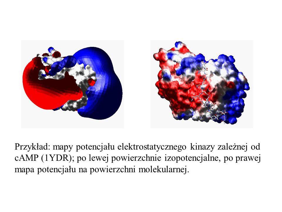 Przykład: mapy potencjału elektrostatycznego kinazy zależnej od cAMP (1YDR); po lewej powierzchnie izopotencjalne, po prawej mapa potencjału na powier