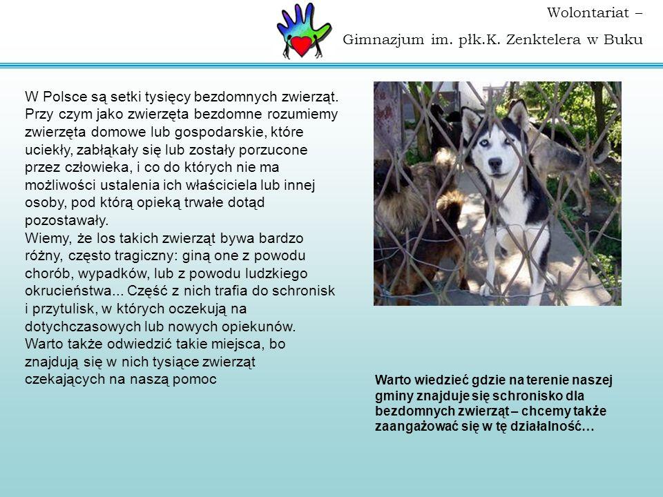 Wolontariat – Gimnazjum im. płk.K. Zenktelera w Buku W Polsce są setki tysięcy bezdomnych zwierząt. Przy czym jako zwierzęta bezdomne rozumiemy zwierz