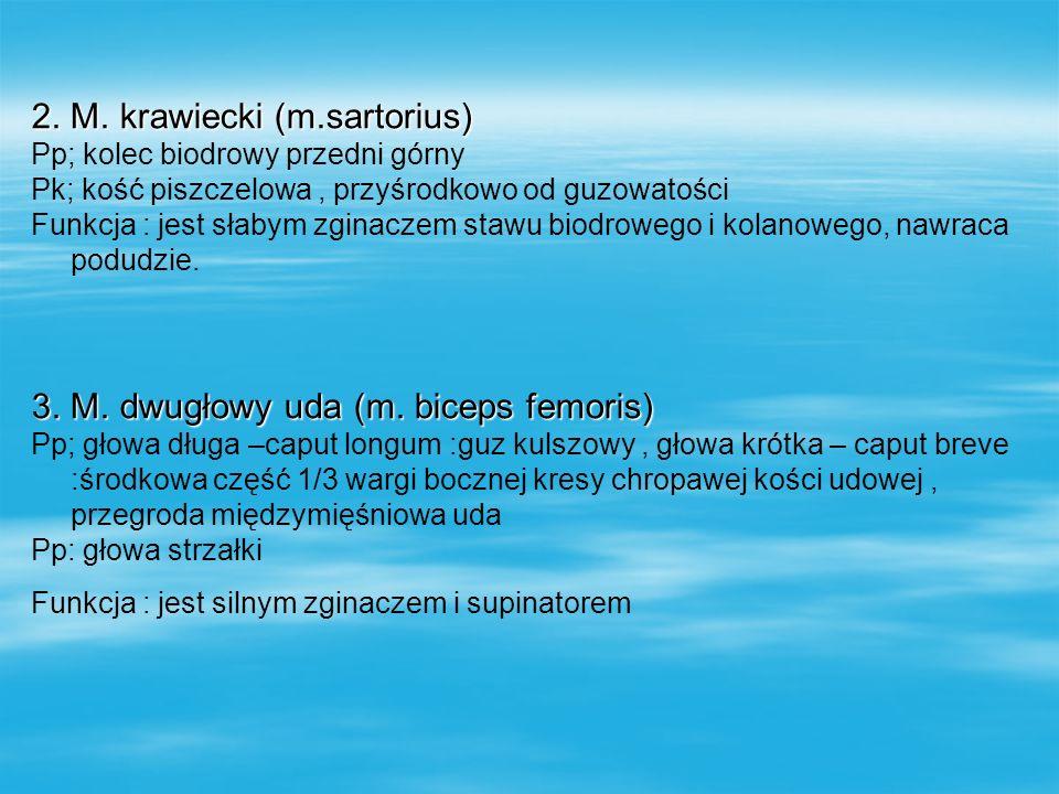 4.M.półbłoniasty (m.semimembranosus) Pp; guz kulszowy Pk; kłykieć przyśrodkowy kości piszczelowej,tylna ściana torebki stawu kolanowego, powięź mięśnia podkolanowego Funkcja : jest zginaczem i rotatorem podudzia 5.M półścięgnisty (m.