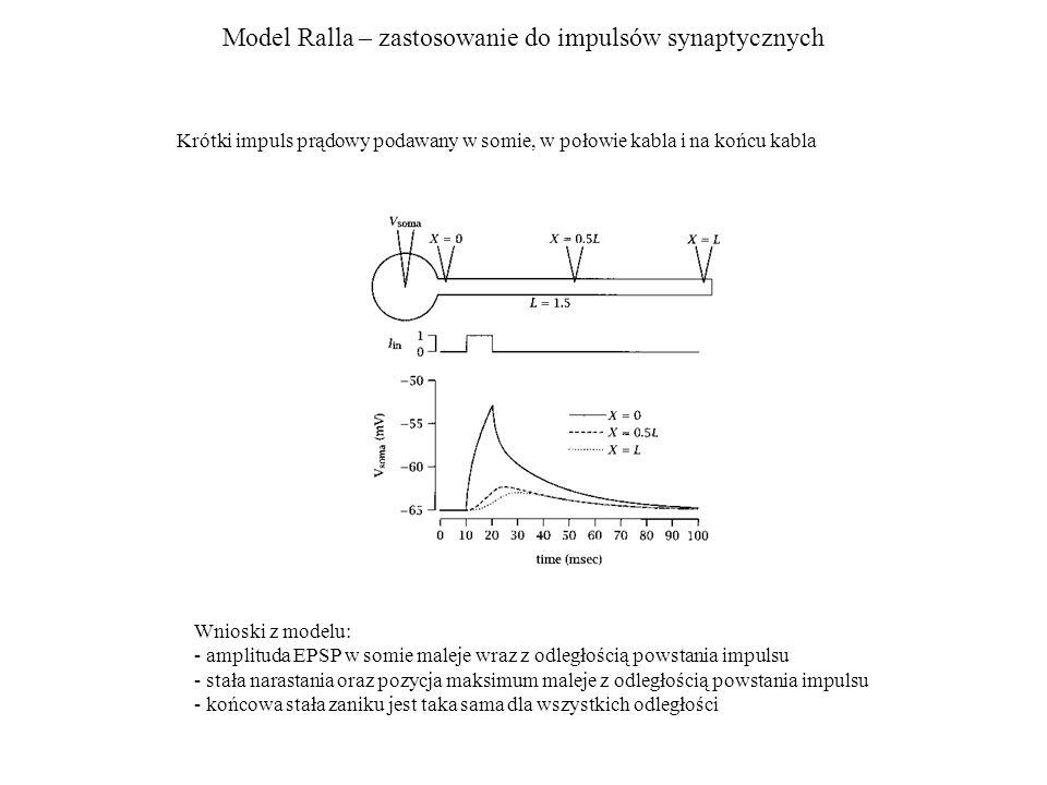 Model Ralla – zastosowanie do impulsów synaptycznych Krótki impuls prądowy podawany w somie, w połowie kabla i na końcu kabla Wnioski z modelu: - ampl