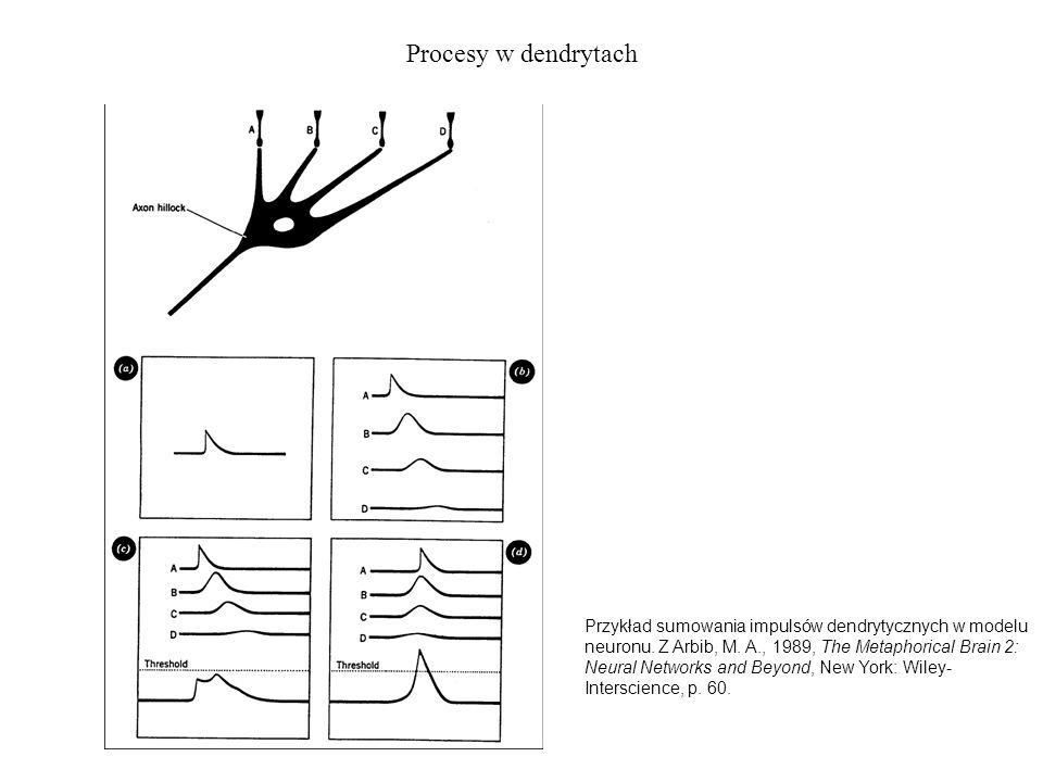 Procesy w dendrytach Przykład sumowania impulsów dendrytycznych w modelu neuronu. Z Arbib, M. A., 1989, The Metaphorical Brain 2: Neural Networks and