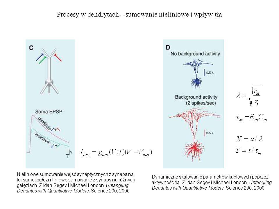 Procesy w dendrytach – sumowanie nieliniowe i wpływ tła Nieliniowe sumowanie wejść synaptycznych z synaps na tej samej gałęzi i liniowe sumowanie z synaps na różnych gałęziach.