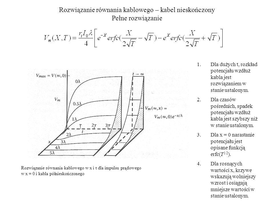 Model Ralla – zastosowanie do impulsów synaptycznych Krótki impuls prądowy podawany w somie, w połowie kabla i na końcu kabla Wnioski z modelu: - amplituda EPSP w somie maleje wraz z odległością powstania impulsu - stała narastania oraz pozycja maksimum maleje z odległością powstania impulsu - końcowa stała zaniku jest taka sama dla wszystkich odległości