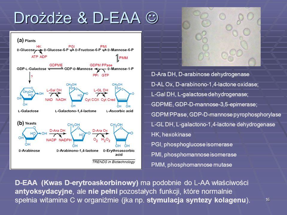 16 Drożdże & D-EAA Drożdże & D-EAA D-Ara DH, D-arabinose dehydrogenase D-AL Ox, D-arabinono-1,4-lactone oxidase; L-Gal DH, L-galactose dehydrogenase;