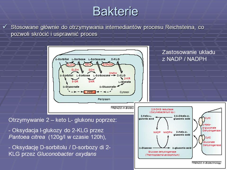 20 Podsumowanie Podsumowanie Obecnie są trzy kierunki w biotechnologii, które mają na ulepszenie produkcji witaminy C: Otrzymanie większej ilości L –AA za pomocą manipulacji biosyntezą L- AA, Otrzymanie większej ilości L –AA za pomocą manipulacji biosyntezą L- AA, Produkcja witaminy C przez drożdże, Produkcja witaminy C przez drożdże, Produkcja intermediatów (2- KLG) procesu Reichsteina przez bakterie Produkcja intermediatów (2- KLG) procesu Reichsteina przez bakterie
