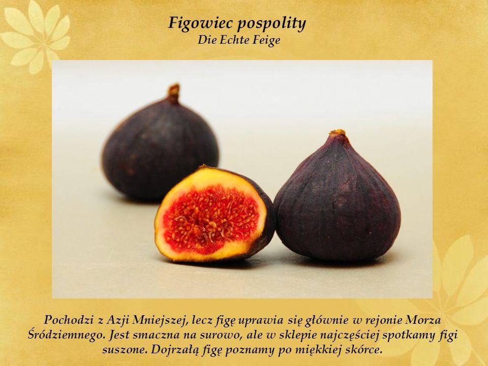 Figowiec pospolity Die Echte Feige Pochodzi z Azji Mniejszej, lecz figę uprawia się głównie w rejonie Morza Śródziemnego.