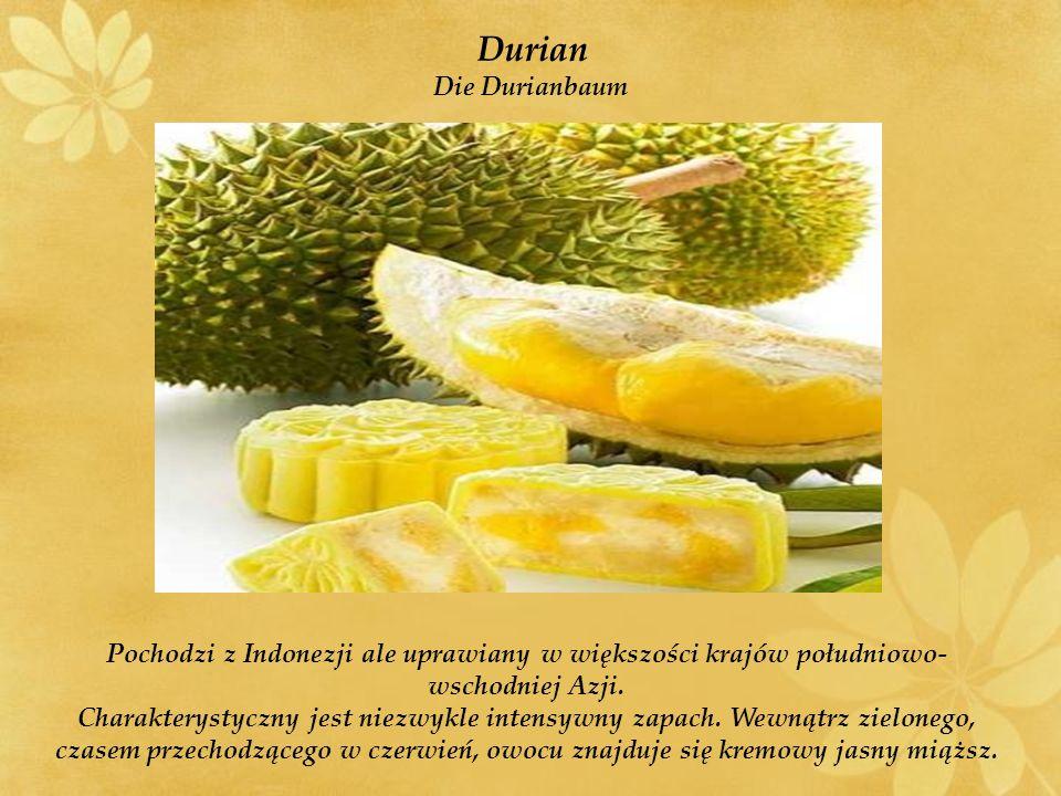 Durian Die Durianbaum Pochodzi z Indonezji ale uprawiany w większości krajów południowo- wschodniej Azji.