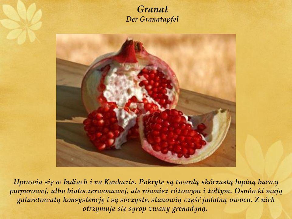 Granat Der Granatapfel Uprawia się w Indiach i na Kaukazie.