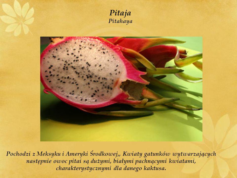 Pochodzi z Meksyku i Ameryki Środkowej,, Kwiaty gatunków wytwarzających następnie owoc pitai są dużymi, białymi pachnącymi kwiatami, charakterystycznymi dla danego kaktusa.