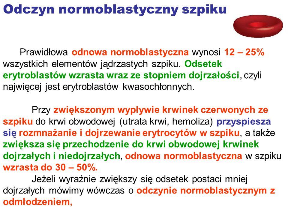 Odczyn normoblastyczny szpiku Prawidłowa odnowa normoblastyczna wynosi 12 – 25% wszystkich elementów jądrzastych szpiku. Odsetek erytroblastów wzrasta