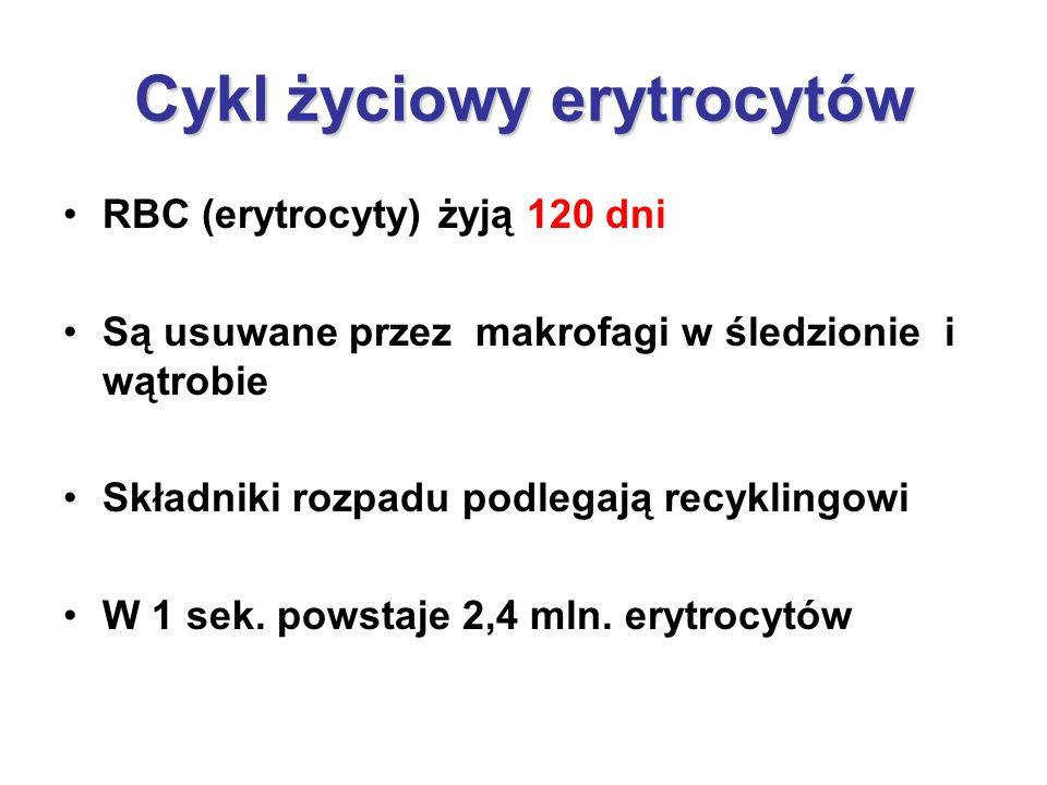 Cykl życiowy erytrocytów RBC (erytrocyty) żyją 120 dni Są usuwane przez makrofagi w śledzionie i wątrobie Składniki rozpadu podlegają recyklingowi W 1