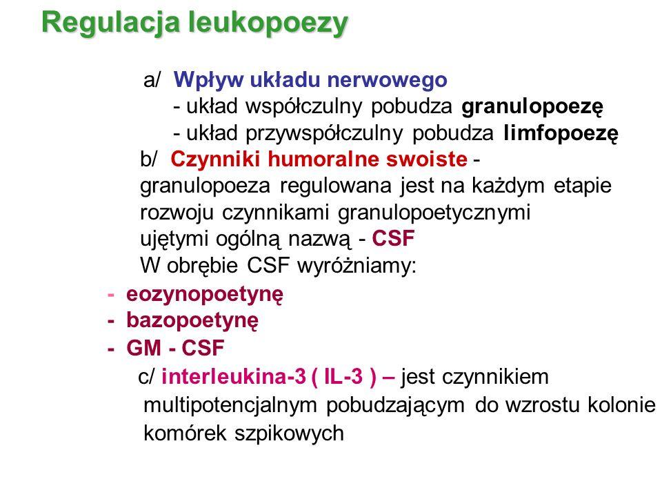 Regulacja leukopoezy a/ Wpływ układu nerwowego - układ współczulny pobudza granulopoezę - układ przywspółczulny pobudza limfopoezę b/ Czynniki humoral