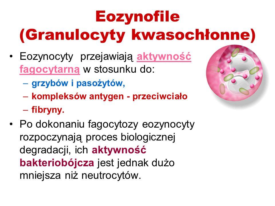 Eozynofile (Granulocyty kwasochłonne) Eozynocyty przejawiają aktywność fagocytarną w stosunku do: –grzybów i pasożytów, –kompleksów antygen - przeciwc