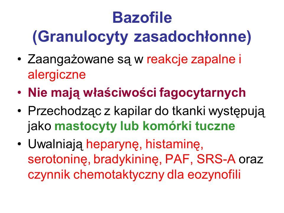 Bazofile (Granulocyty zasadochłonne) Zaangażowane są w reakcje zapalne i alergiczne Nie mają właściwości fagocytarnych Przechodząc z kapilar do tkanki