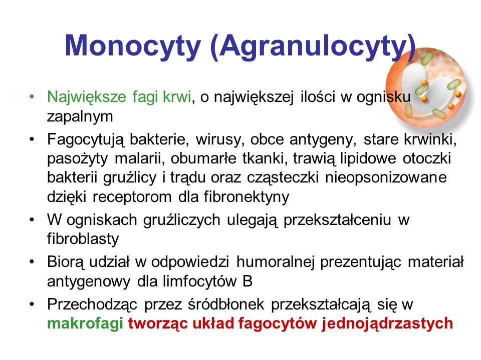 Monocyty (Agranulocyty) Największe fagi krwi, o największej ilości w ognisku zapalnym Fagocytują bakterie, wirusy, obce antygeny, stare krwinki, pasoż