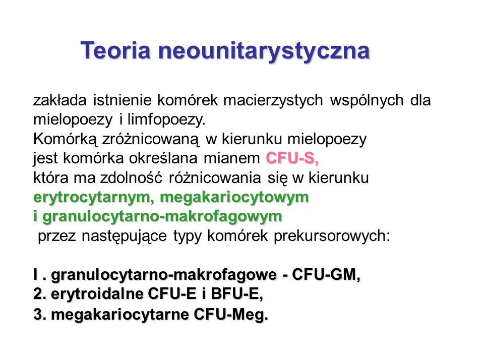 Teoria neounitarystyczna Teoria neounitarystyczna zakłada istnienie komórek macierzystych wspólnych dla mielopoezy i limfopoezy. Komórką zróżnicowaną