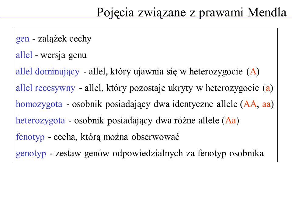 Pojęcia związane z prawami Mendla gen - zalążek cechy allel - wersja genu allel dominujący - allel, który ujawnia się w heterozygocie (A) allel recesy