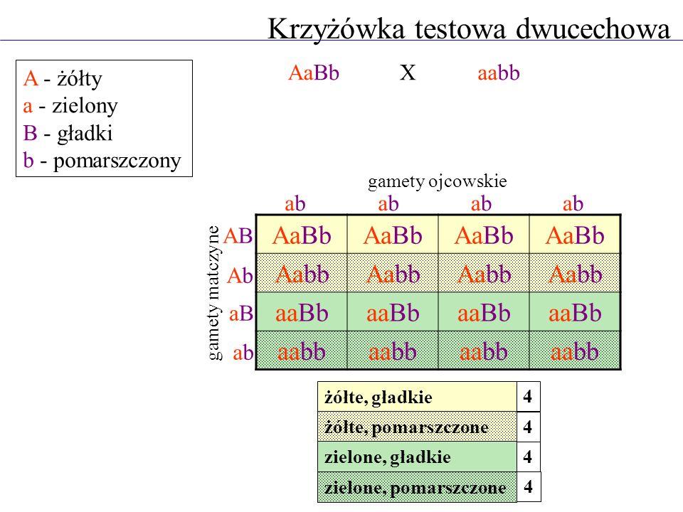 Krzyżówka testowa dwucechowa A - żółty a - zielony B - gładki b - pomarszczony AaBbaabb AaBb Aabb aaBb aabb abababababababab ABAB AbAb aBaB abab gamet