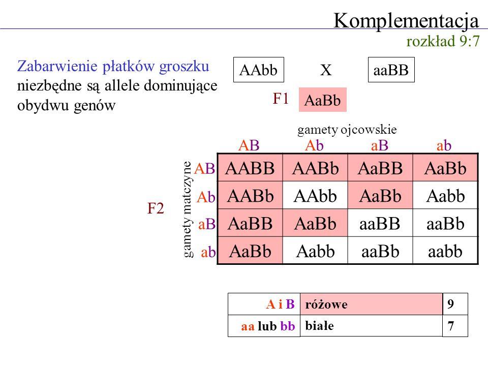 Komplementacja Zabarwienie płatków groszku niezbędne są allele dominujące obydwu genów rozkład 9:7 AAbbaaBB AaBb AABBAABbAaBBAaBb AABbAAbbAaBbAabb AaB