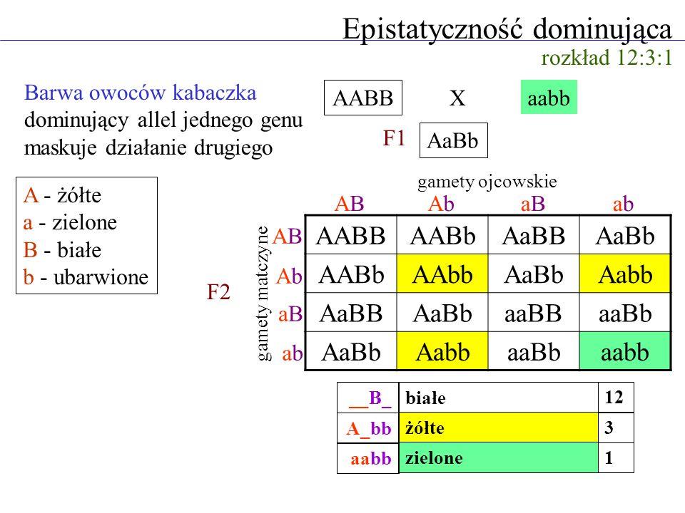 Epistatyczność dominująca rozkład 12:3:1 Barwa owoców kabaczka dominujący allel jednego genu maskuje działanie drugiego AABB aabb AaBb AABBAABbAaBBAaB