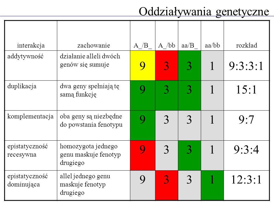 Oddziaływania genetyczne interakcjazachowanieA_/B_A_/bbaa/B_aa/bbrozkład addytywnośćdziałanie alleli dwóch genów się sumuje 93319:3:3:1 duplikacjadwa