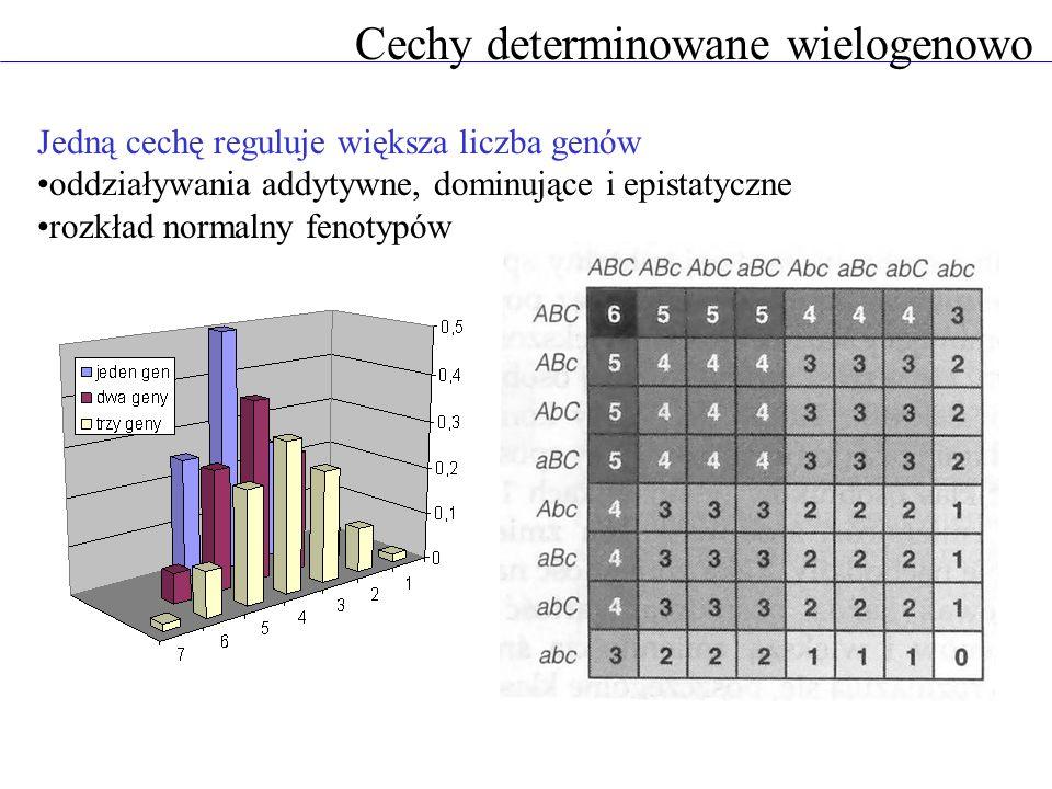 Cechy determinowane wielogenowo Jedną cechę reguluje większa liczba genów oddziaływania addytywne, dominujące i epistatyczne rozkład normalny fenotypó