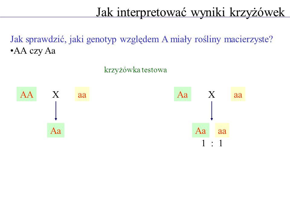Jak interpretować wyniki krzyżówek AAaaX Aa aaX Aaaa Jak sprawdzić, jaki genotyp względem A miały rośliny macierzyste? AA czy Aa krzyżówka testowa 1 :