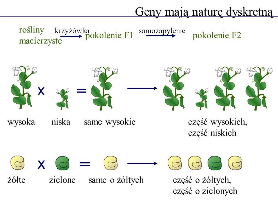 Geny mają naturę dyskretną rośliny macierzyste pokolenie F1pokolenie F2 wysokaniskasame wysokieczęść wysokich, część niskich żółtezielonesame o żółtyc