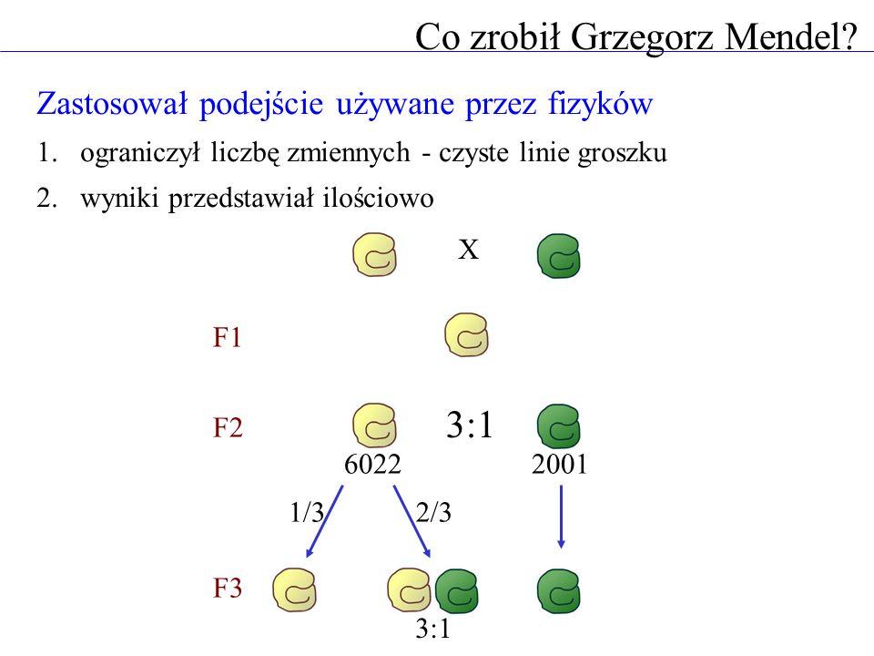 Co zrobił Grzegorz Mendel? Zastosował podejście używane przez fizyków 1.ograniczył liczbę zmiennych - czyste linie groszku 2.wyniki przedstawiał ilośc